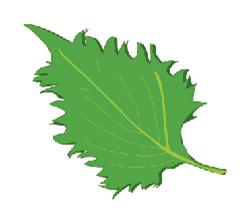 季節の野菜(夏)のイラスト大葉